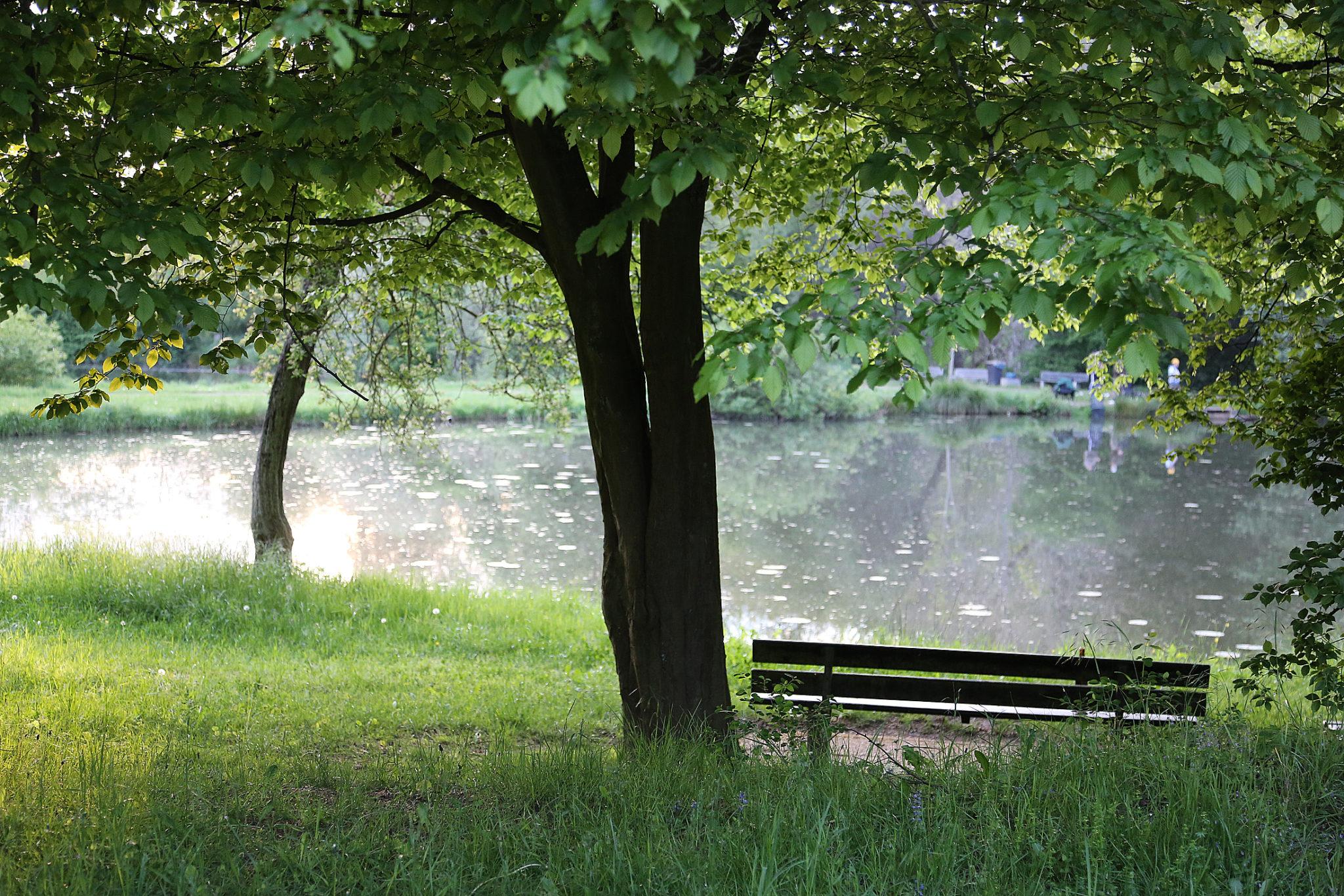 zu sehen ist einer der Fischweiher mit einem Baum und einer Bank im Vordergrund