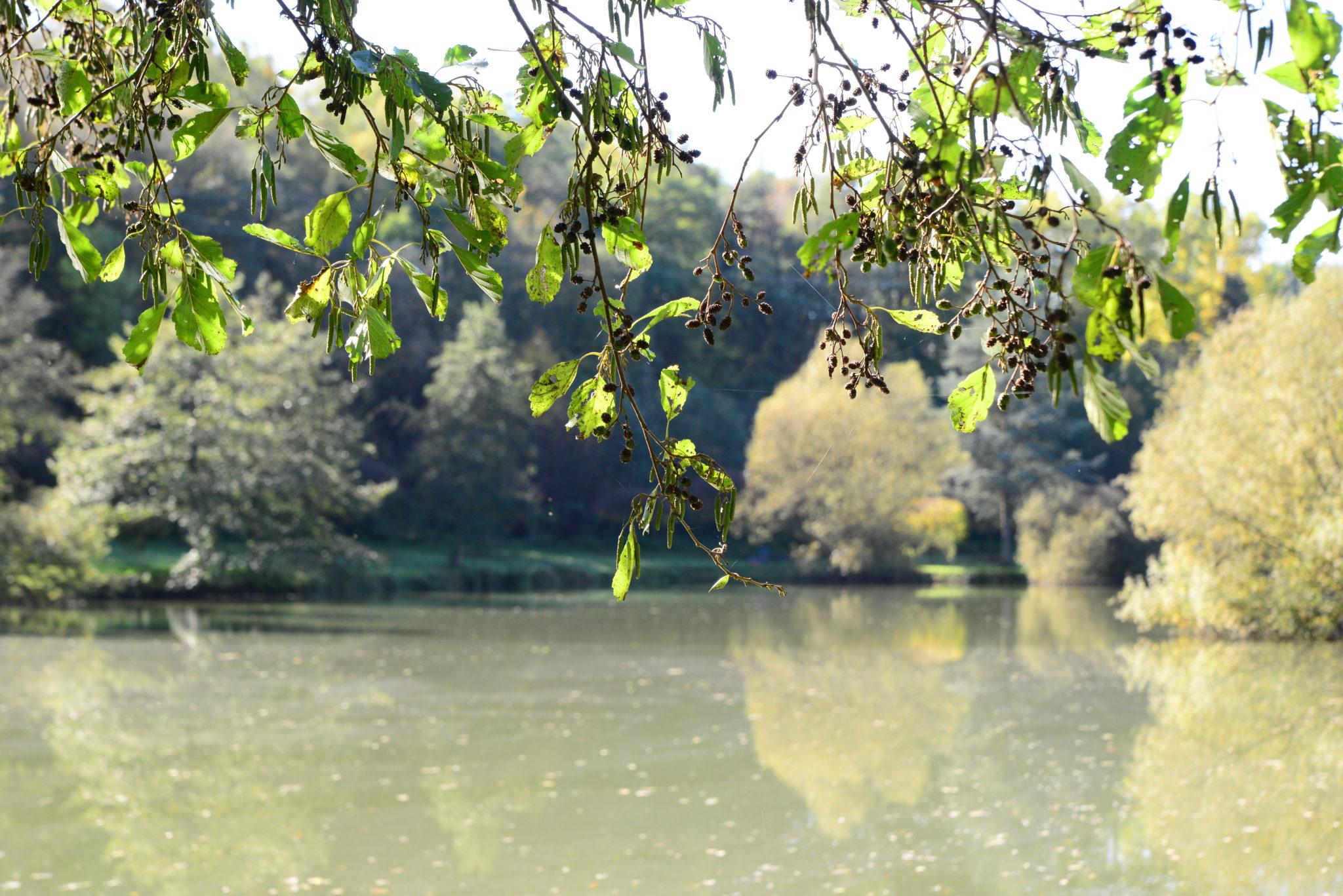 zu sehen ist im Vordergrund einer der Weiher im Bommersbachtal sowie im Hintergrund eine Baumlandschaft
